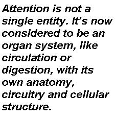 attention-quote2
