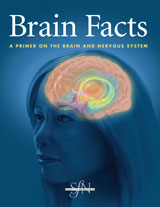 brain_facts