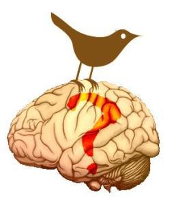 twitter-on-the-brain